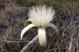 Flor no Parque Nacional da Chapada dos Veadeiros